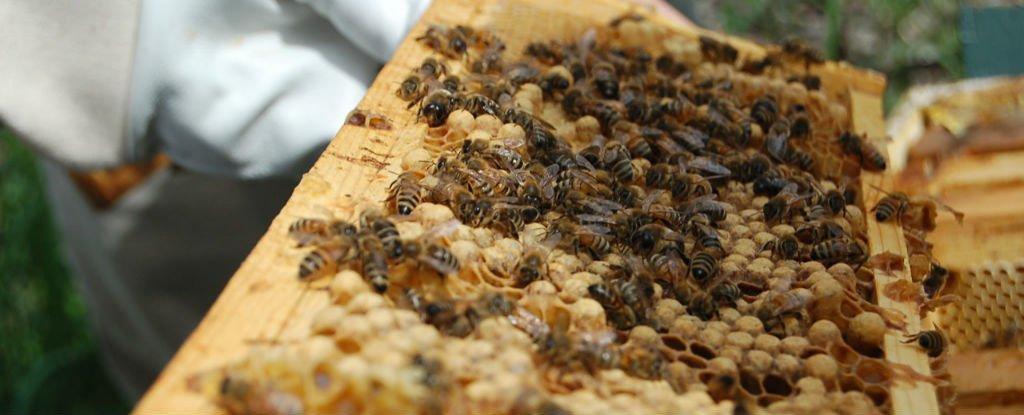 bee-death_1024