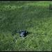 Vlcsnap 2012 02 07 14h52m06s139