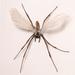 Fabre  jan   fantasie insecten sculpturen %28detail%29  1979 foto syb'l. s.   pictures