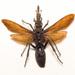 Fabre  jan  fantasie  insecten sculpturen  1979 detail 4