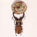 Fabre  jan  fantasie insecten sculpturen %28 detail%29  1979 foto  syb'l. s.   pictures