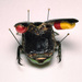 Fabre  jan  fantasie insecten sculpturen %28detail%29  19 79   foto  syb'l. s.   pictures