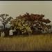 Jacques charlier  paysage artistique 1970 photo m hkacc 1