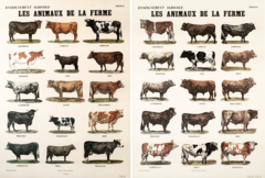 Broodthaers farmanimals bps22