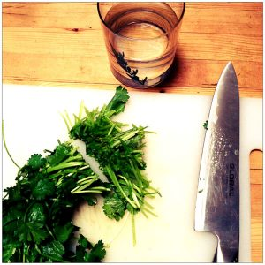 How to cut Cilantro before storing