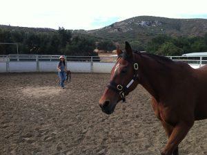 Lisa Tran StrikeTrue Equus Coaching