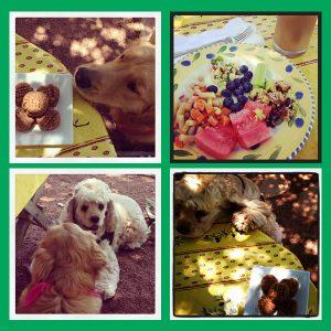 San Diego Food Bloggers Picnic | Dog Days of Summer | Recipe Renovator