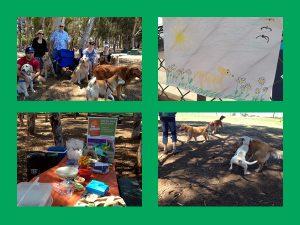 Golden Retriever Picnic | Dog Days of Summer | Recipe Renovator