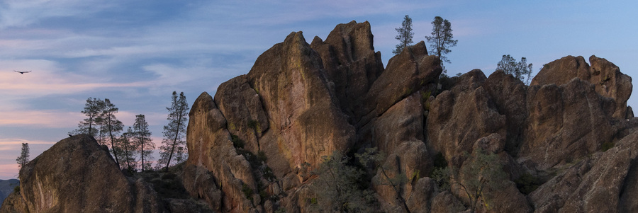 A California Condor soars amongst the incredible ancient rock formations that make up Pinnacles National Park natural landscape.