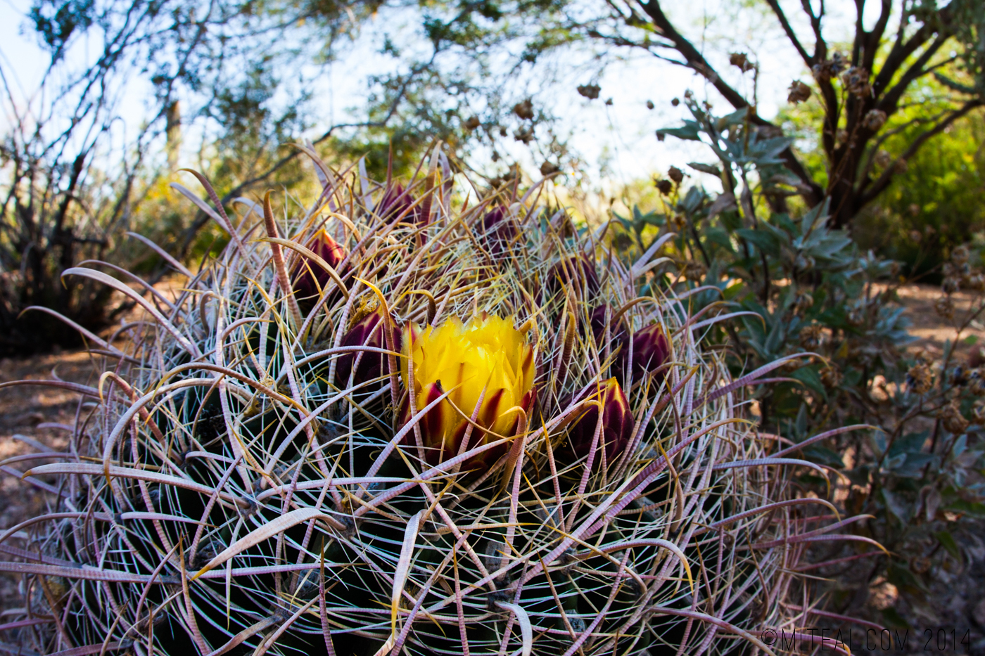 Spring at the Desert Botanical Gardens