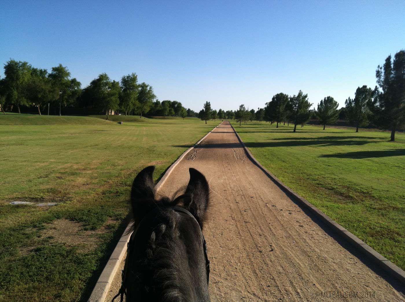 A snapshot from an afternoon ride on a  Friesian mare named Loki