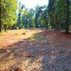 Mobile Home Lot for Rent: Beautiful Shaded 2.5 Acres, Foley, AL