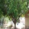 A0b13f87-a98e-4e64-9713-eb3a066eb057_100