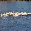 Mobile Home Park for Directory: Riverwalk - Directory, Gibsonton, FL