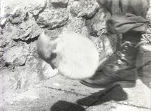 Stilinovic odnos noga kruh 2 b