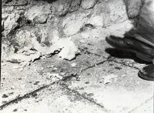 Stilinovic odnos noga kruh 5 a