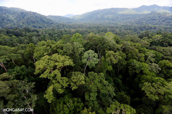 BORNEO RAINFOREST.