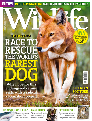 Photos appear in the new issue of BBC Wildlife Magazine.