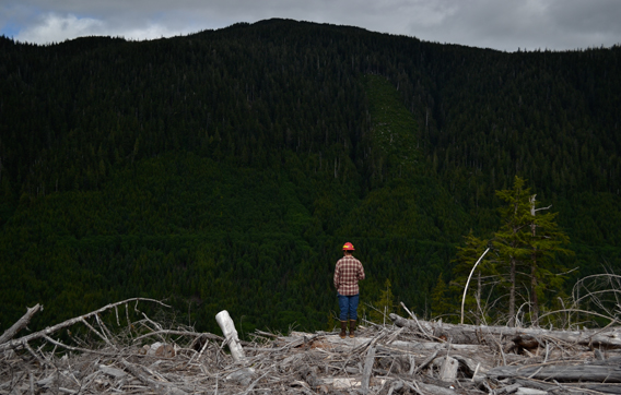 Logging at a river restoration site. Photo courtesy of the Sitka Conservation Society.