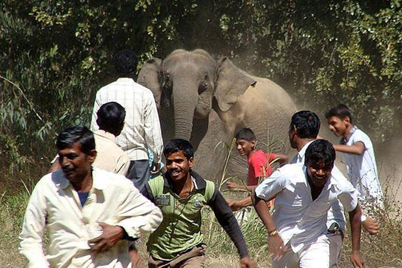 Elephant and human conflict is a common issue in India, exacerbated by habitat loss. Photo courtesy of Nishant Srinivasaiah.