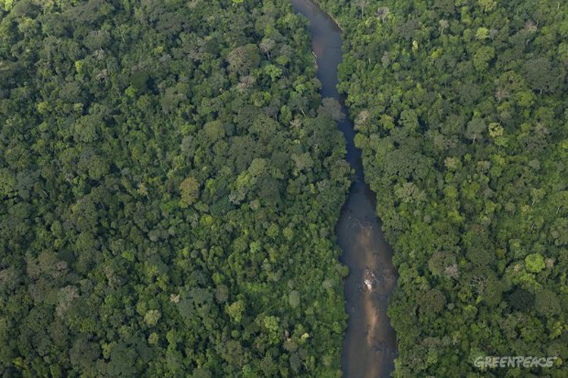 Forest and river in Herakles' concession area. Photo: © Greenpeace/Alex Yallop.