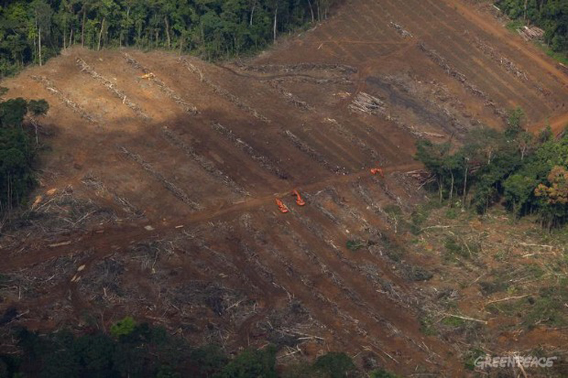 Construction equipment in forest cleared by Herakles Farms. Photo: © Greenpeace/Alex Yallop.