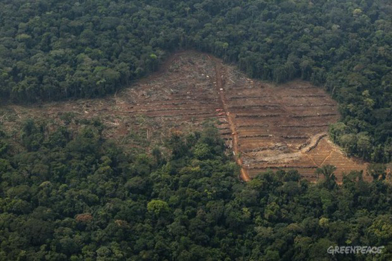 Clearing of trees in a concession area of Herakles Farm's area for a palm oil plantation. Greenpeace says these clearings are illegal since Herakles' lease has not been given final approval. Herakles Farm did not respond to request for comment. Photo: © Greenpeace/Alex Yallop.