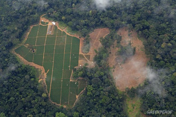 Oil palm nursery in a Herakles Farm's concession area. Last year Herakles Farms said it had permission to set up three nurseries covering 100 hectares even before producing a Social and Environmental Impact Assessment (SEIA). Photo: © Greenpeace/Alex Yallop.