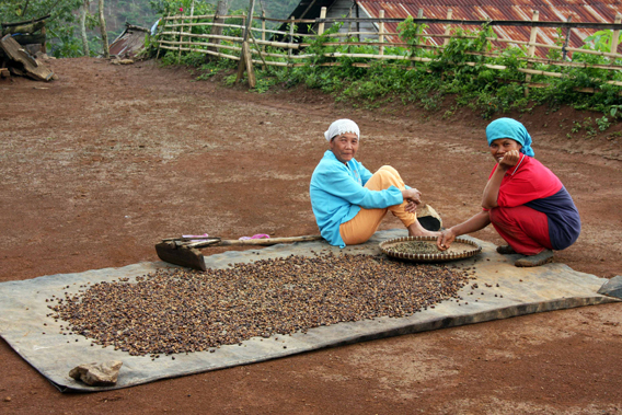 Squatters drying their coffee harvest in Bukit Barisan Selatan National Park. Photo courtesy of Patrice Levang.