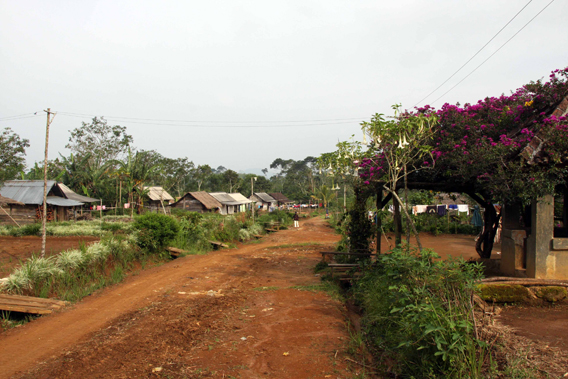 An old village of squatters inside the Bukit Barisan Selatan National Park, including a mature bougainvillea and electric wires. Photo courtesy of Patrice Levang.