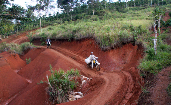Motorbikes carrying coffee bags out of Bukit Barisan Selatan National Park. Photo courtesy of Patrice Levang.