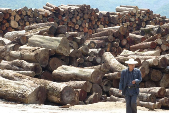 >Logs smuggled across the border from Myanmar to China. Photo © : EIA.