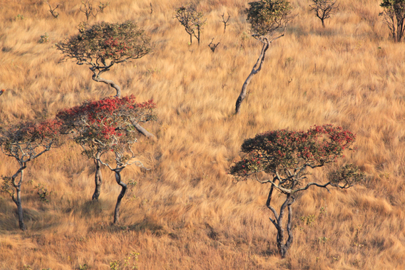 The dry season brings autumnal colors to Upemba. Photo courtesy of the FZS.