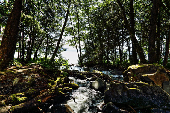 Stream in the Tongass National Forest. Photo by: Ian Majszak.