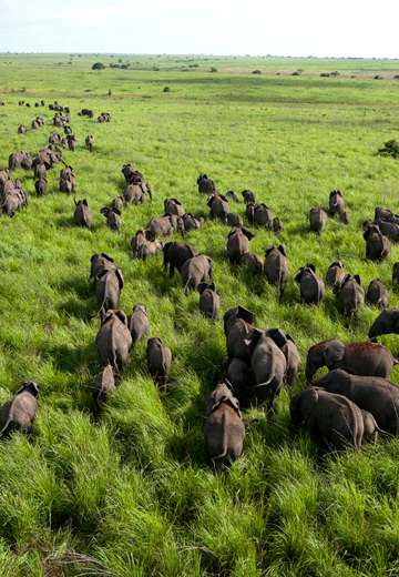 Elephant herd. Photo by: Nuria Ortega.