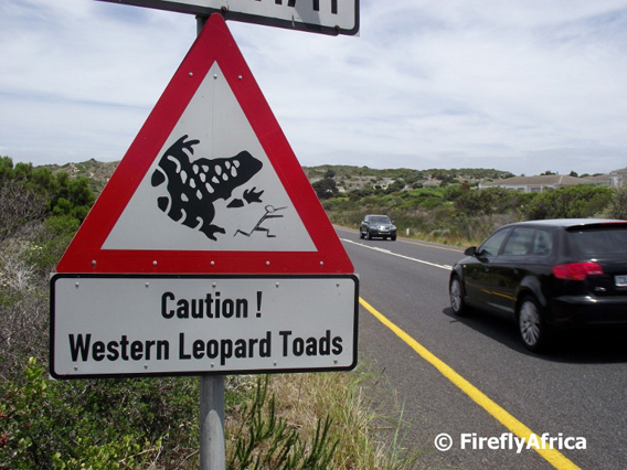 Western leopard toad signs that were put up this year. Photo courtesy of: Hanniki Pieterse.