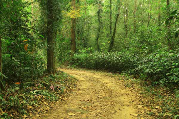 Forest where the new frog species was discovered. Photo courtesy of Mendis Wickramasinghe.