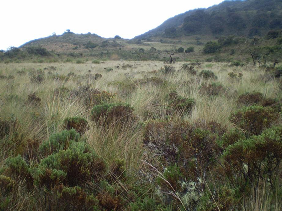 Paramo grassland. Photo by: César Medina.