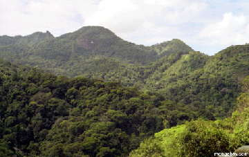 The Atlantic Forest outside of Rio de Janeiro. Photo by: Rhett A. Butler.