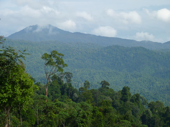 Forest and mountains in Kenyir Wildlife Corridor. Photo by: Gopalasamy Reuben Clements.