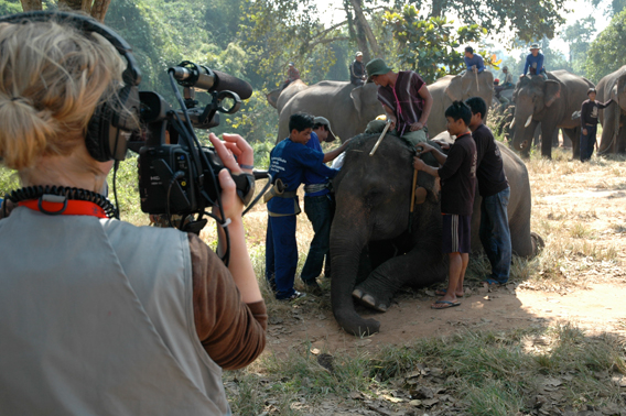 Michelle Mizner filming the Last Elephants in Thailand. Image courtesy of Donald Tayloe.
