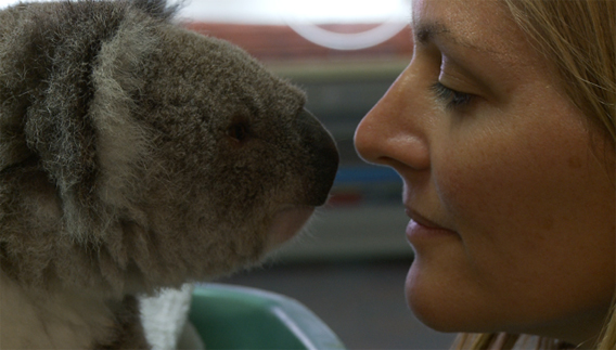 Susan Kelly with koala. Image courtesy of Susan Kelly.