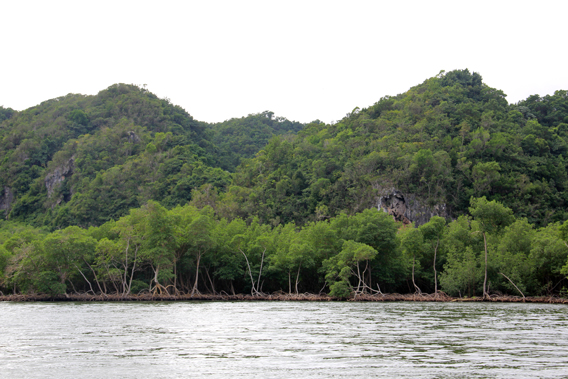 Rainforest-covered karst mountains with pristine mangroves beneath characterizes one of the most stunning protected areas in the Caribbean: Los Haitises National Park. Photo by: Jeremy Hance.