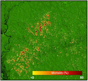 A mortality map of the Amazon near Manaus, Brazil based on Landsat satellite images shows the spatial pattern of tree mortality.
