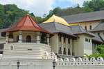 Sri Lanka to give poached ivory to Buddhist temple, flouting international agreements
