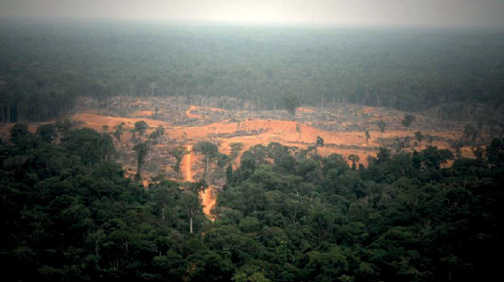 Recent forest clearance for oil palm by Olam, Kango, Gabon. Photo by: Alexander De Marcq.