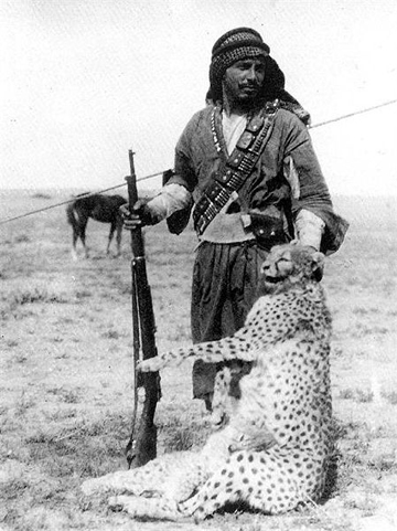 Cheetah mother and cub hunted by Bedouin in 1925 in Iraq. Asiatic cheetahs are now extinct in Iraq.