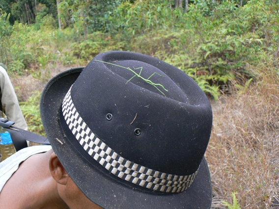 Stick insect prefers hat. Photo by: Greg McCann.