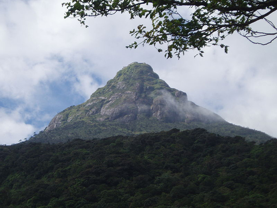 The dramatic Sripada peak where many of the new species were discovered. Photo by: L.J. Mendis Wickramasinghe.