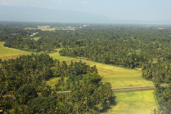 Lowland rice paddies just outside Banda Aceh.
